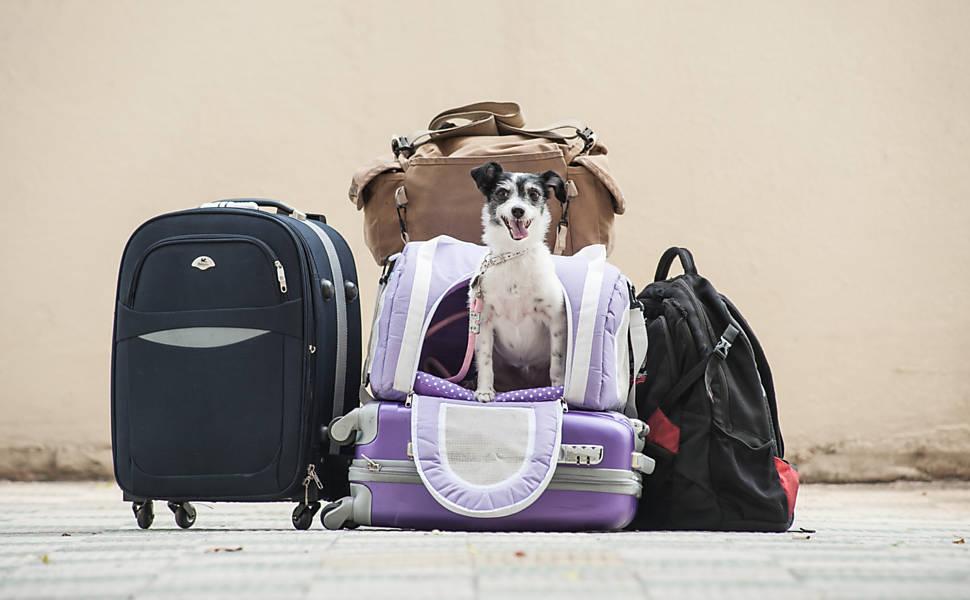 viagens-aereas-com-animais-1