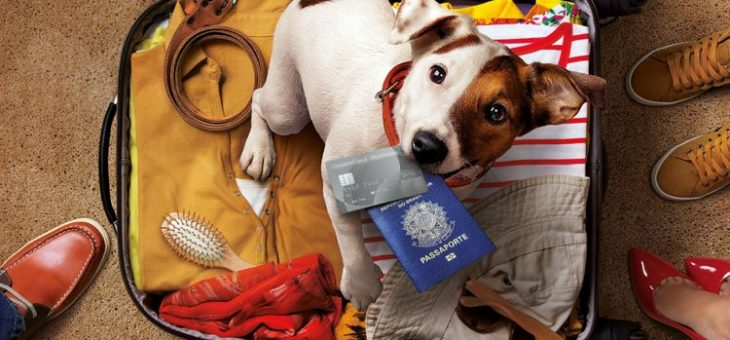 Viajar com pet cuidado animal